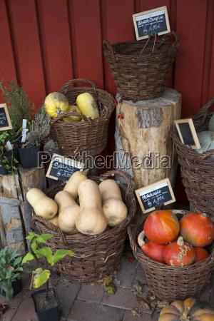 verduras organicas mixtas en cestas de