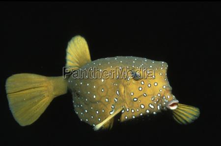 primer plano pescado horizontalmente submarino fotografia