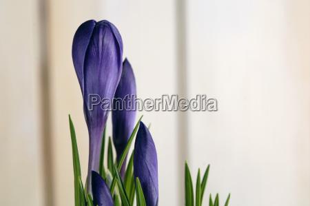 primer plano flor planta botanica frescura