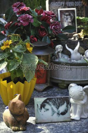 muerte flor planta estatua mascotas perdida