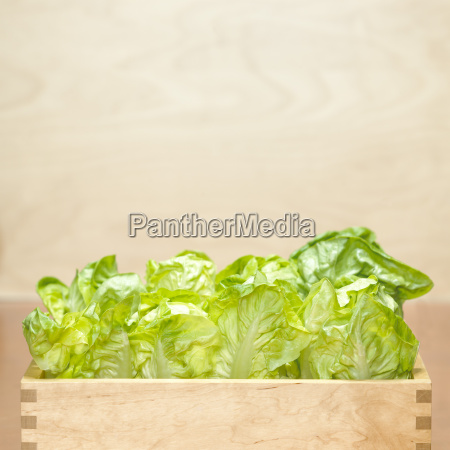 madera frescura crudo caja pecho caja