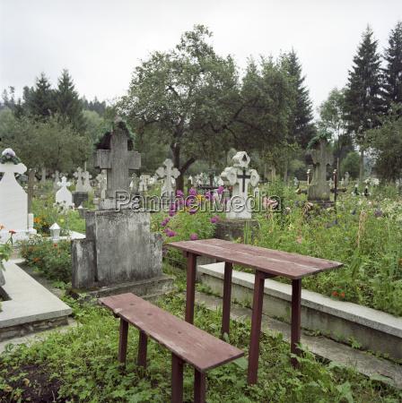 religion muerte arbol flor planta cruz