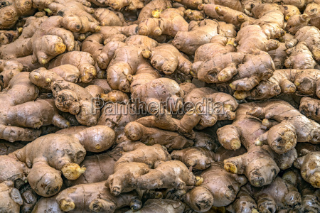 fresh ginger roots display in the
