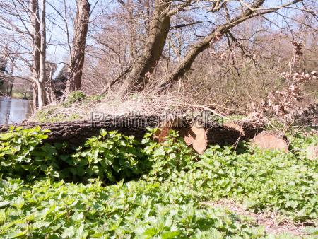 fallen down tree in the sunlight