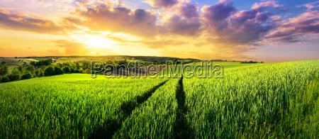 puesta del sol campo verano veraniego