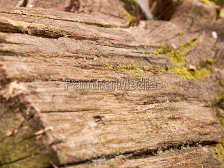 the rough brown texture of bark