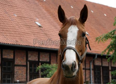 caballo animal mascotas yegua cria cria