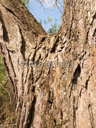 tree bark detail in full light