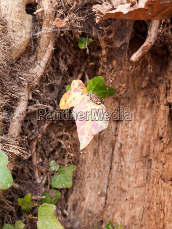 a dead leaf dangling from a