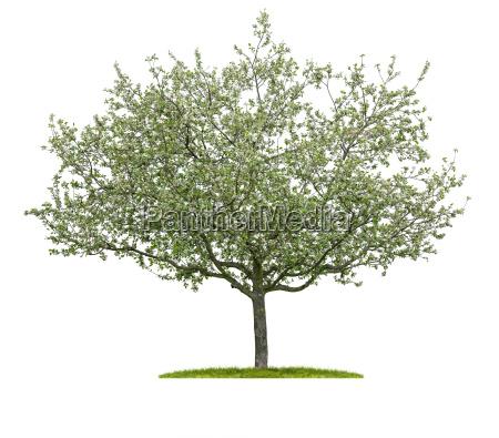 opcional arbol hojas arbol de hoja