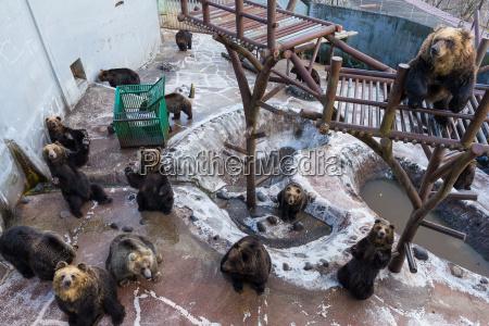 comida juego juega parque piedra animal