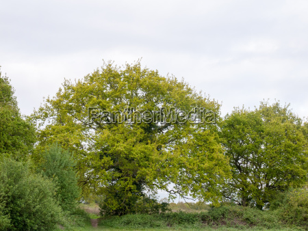 lovely large tree outside in the