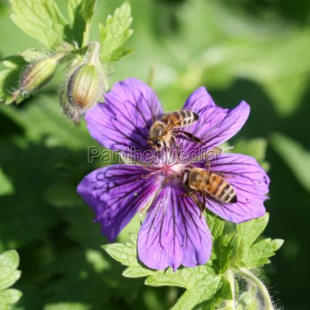 parque jardin insecto abeja violeta jardines