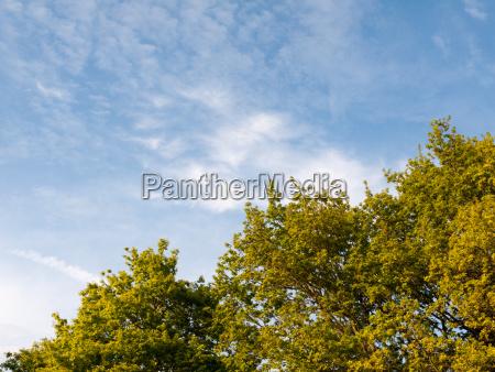a lush green peaceful skyline of