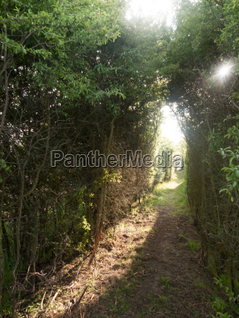 a pathway through a meadow with