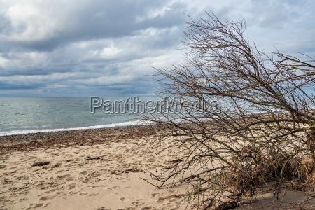 fallen tree on the coast of