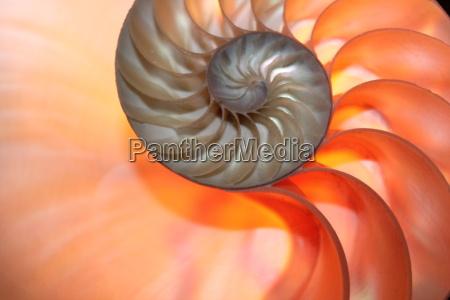 espacio cruz concha dorado simetria espiral