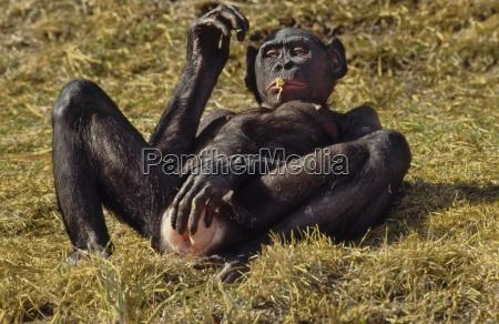 animal mamifero africa horizontalmente al aire