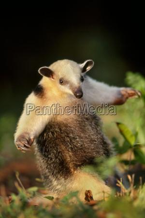animal mamifero piel al aire libre