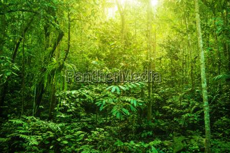 bello bella foglia ambiente colore albero