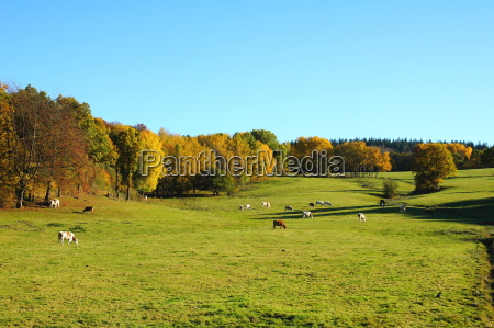 prados apacentar pasto paisaje naturaleza otonyo