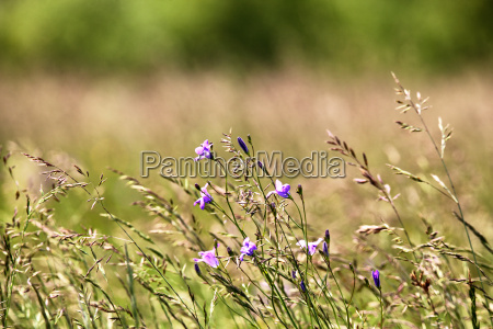 spectacular meadow with bright beautiful and