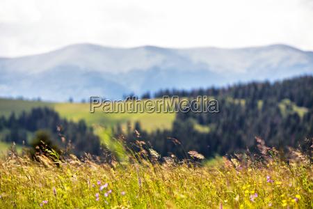 beautiful nature landscape alpine meadow