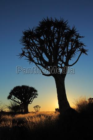 arbol arboles namibia salida del sol
