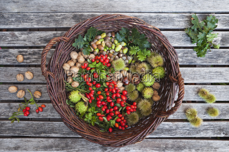 naturaleza muerta hoja color cosecha frescura
