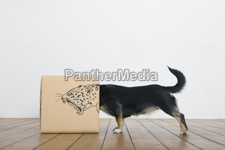 peligro interior salvaje perro posicion fauna