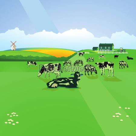 comida medio ambiente rural animal verde