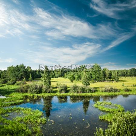panorama forestal y de campo