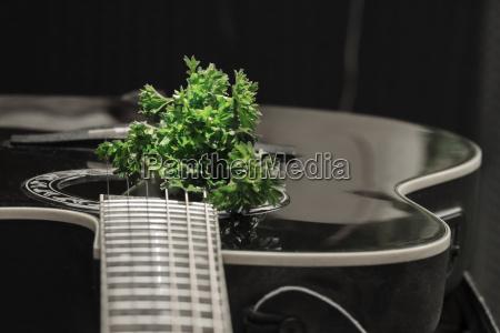 musica verde negro guitarra cadenas perejil