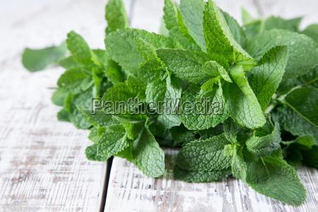 menta manojo de hoja organica verde
