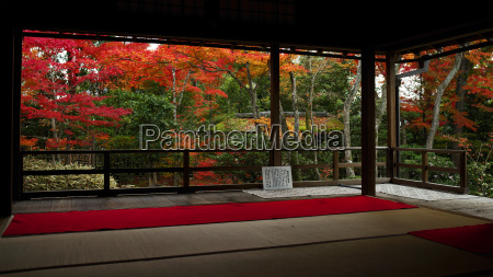 autumn colours in daiho in temple