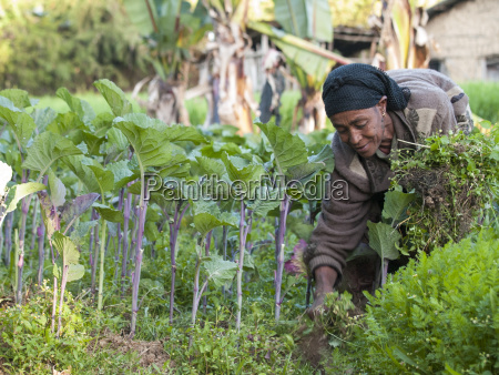 a woman working in the fields