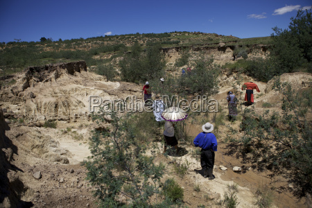 women planting trees in a donga