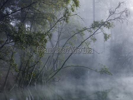 bosque encantadoniebla cubre los arboles alrededor