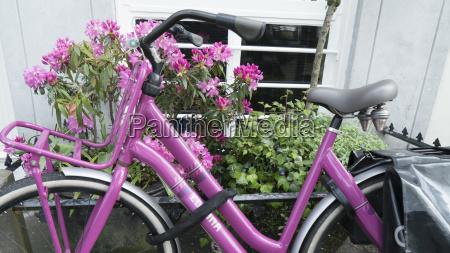 paseo viaje color trafico flor planta