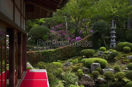 rhododendron blooming in zen garden sanzen