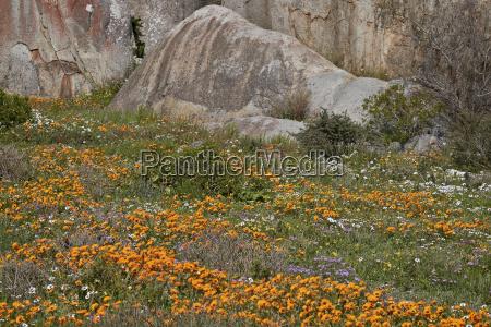 orange purple white and yellow wildflowers