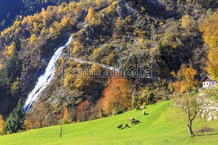 paseo viaje color arbol campo caucasico