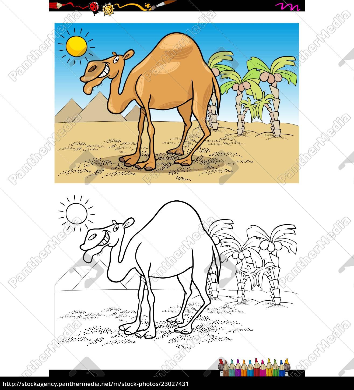 Vector Libre De Derechos 23027431 Caricatura De Camello En El Desierto Libro Para Colorear