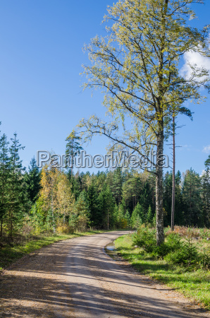 country road in autumn forest estonia