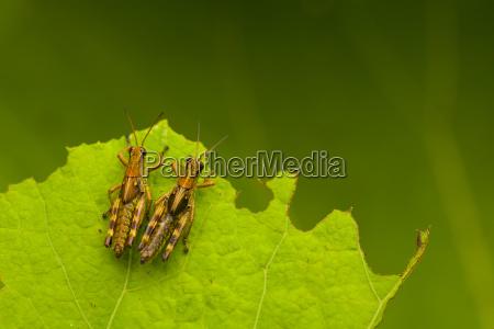 hoja primer plano animal insecto verde
