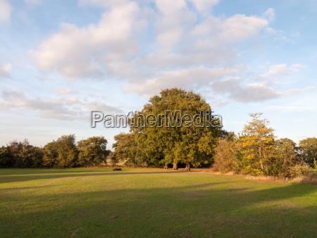 tree across field with sky background
