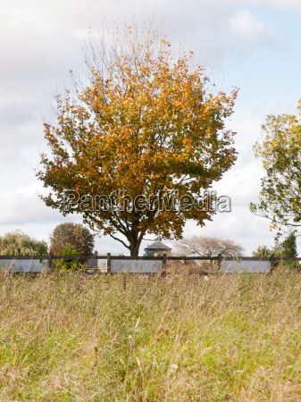 autumn tree behind fence of field