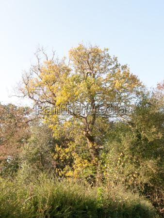 beautiful sun light large tree in