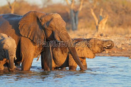 elefantes agua potable
