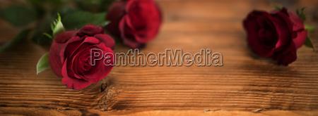 hermosas rosas rojas para el dia